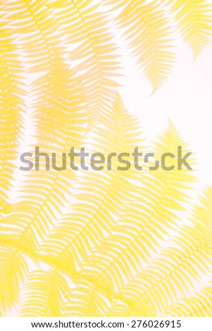 yellow palm leaves - stock photo