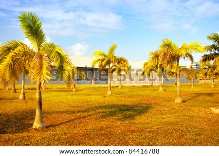 yellow palm tree - stock photo