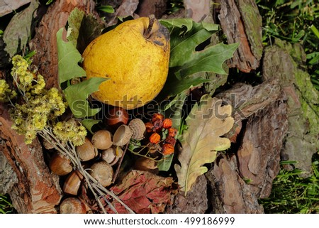 Yellow pear, autumn red, yellow, green leaves, acorns, rowan berries, pine bark on green grass background. Autumn still life concept