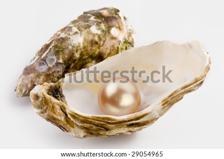 Yellow pearl is in a shell. - stock photo