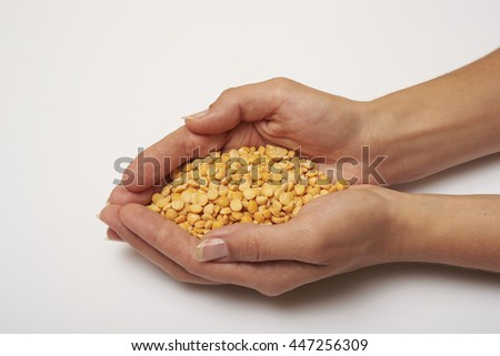 yellow peas in hands on a white background