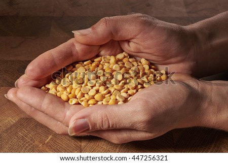 yellow peas in outstretched hands