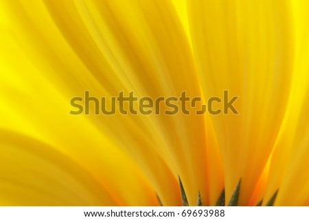 Yellow petals. Background. - stock photo