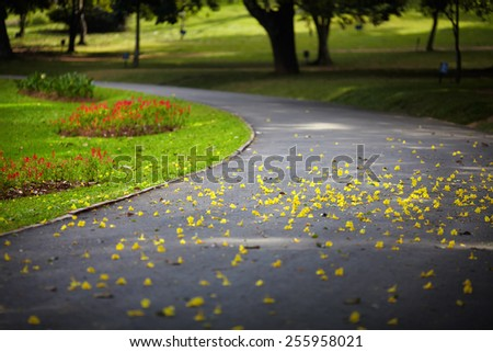 Yellow petals of blooming plants lie on the asphalt path passing through a green lawn