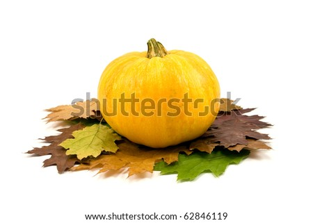 yellow pumpkin and autumnal leaves on white background