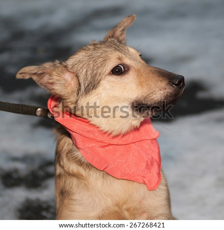 Yellow puppy in pink bandanna outside - stock photo