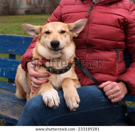 Yellow puppy on leash sits and smiling on bench next to hostess - stock photo