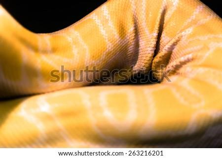 Yellow pyton leather folds - stock photo