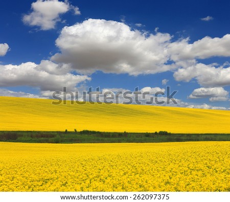 Yellow rape field under nice clouds in blue sky - stock photo