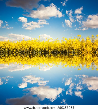 Yellow rapes flowers and blue sky with white fluffy clouds. Dramatic scenery. Ukraine, Europe. Beauty world. Flip canvas vertical. Double exposure effect. - stock photo