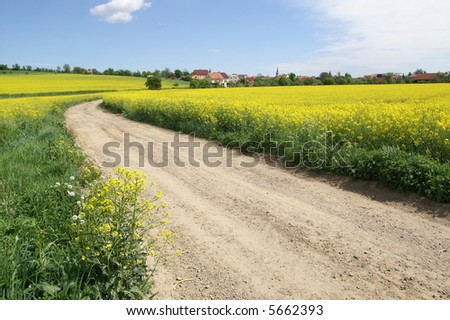 Yellow rapeseed field and field path