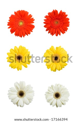 Yellow, Red and White flowers with clipping path, so you can easily cut out and place over the top of a design