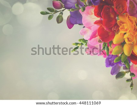 yellow, red, pink and blue freesia flowers frame over blue background, retro toned