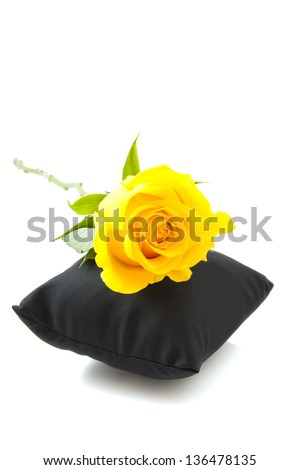 Yellow rose on black pillow isolated over white - stock photo