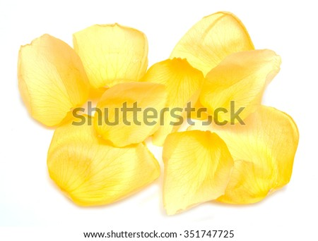 yellow rose petals on a white background
