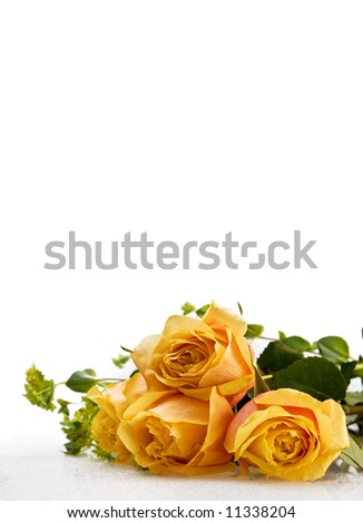 yellow roses - stock photo