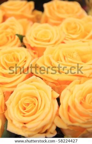 yellow roses - stock photo