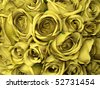 yellow  roses background - stock photo