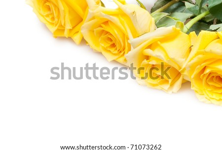 yellow roses isolated on white - stock photo