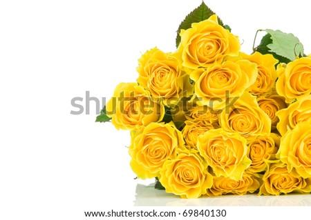 Yellow roses isolated on white background - stock photo