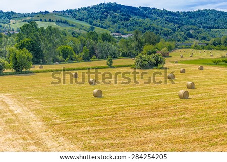 yellow round bales of hay spread in cultivated fields now mown in the Italian countryside