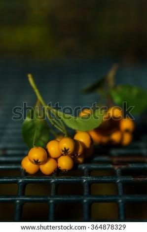 yellow rowan - stock photo