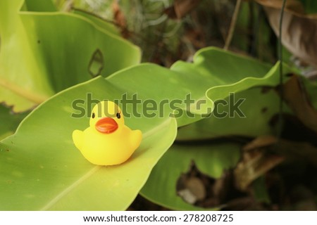 Yellow rubber duck on green leaves at the park.