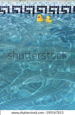 Yellow rubber ducks in a swimming pool. Indoor swimming pool. UK - stock photo