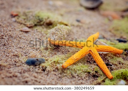 yellow seastar on sandy beach. natural summer background - stock photo