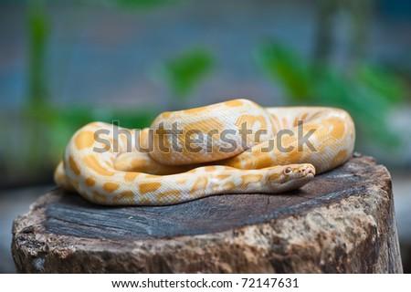 Yellow snake on wood - stock photo