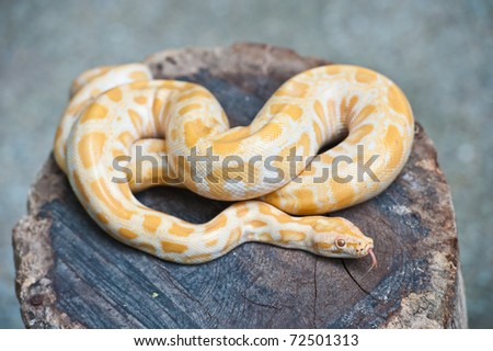 Yellow snake on wood - stock photo