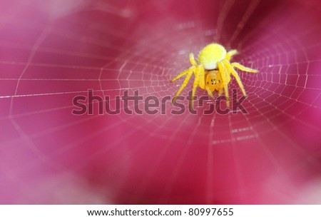 yellow spider on net - stock photo