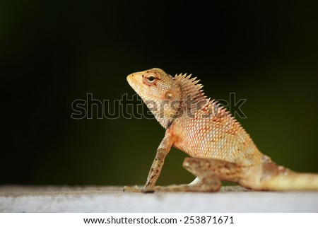 Yellow spiked small lizard sitting on a rock and watching. - stock photo