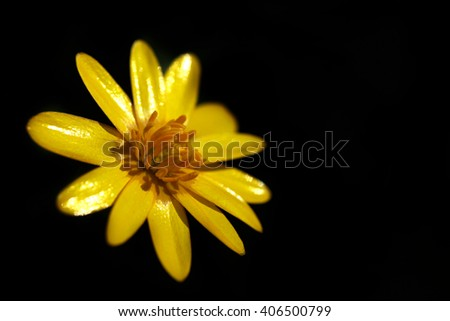 yellow spring flower - stock photo