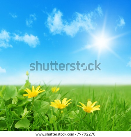 Yellow spring flowers in the field and sun. - stock photo