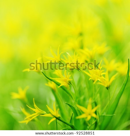 yellow spring flowers macro close up - stock photo