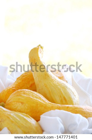 Yellow Squash with Copy Space - stock photo