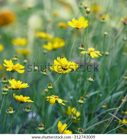 Yellow summer flowers - stock photo