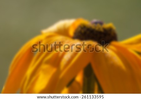 Yellow sun flower blooming with green background, blurred, out of focus, artistic, spring, Kolkata, India - stock photo