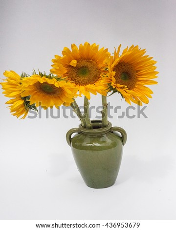 Yellow sunflowers in a green vase on white paper background decorative still-life group bunch bouquet bright olive stems leaves seeds brown black center clean  - stock photo