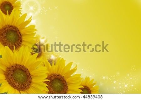 Yellow sunflowers on a colour background