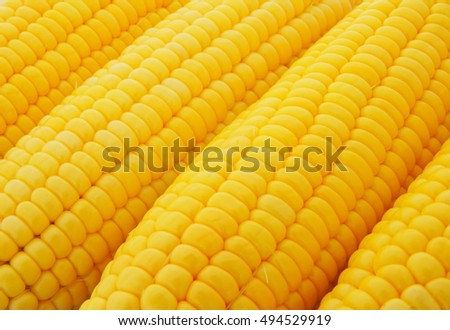 Yellow sweet corn ears as background