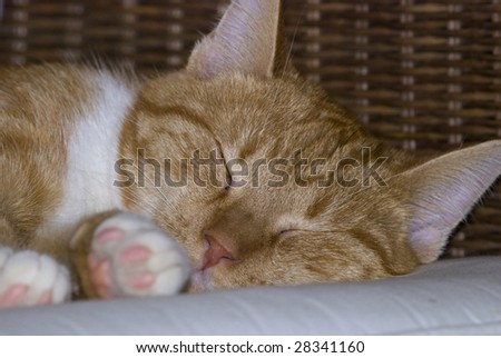 Yellow tabby cat comfortably sleeps on a wicker chair - stock photo