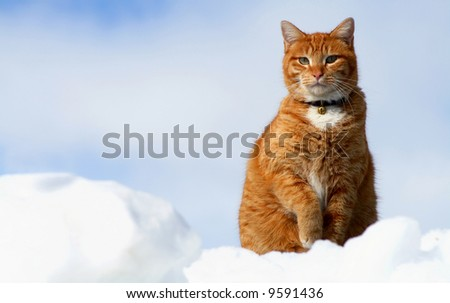 Yellow Tabby sitting in snow resembling clouds - stock photo