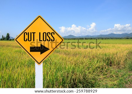 Yellow traffic sign text for stop loss and green paddy rice plant and blue sky background - stock photo