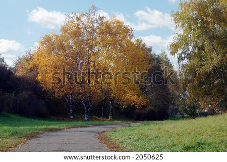 yellow tree in the park