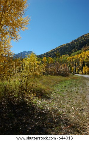 Yellow Trees along the Road over McClure Pass in Autumn