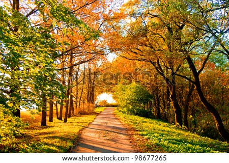 Yellow Trees Fall Landscape