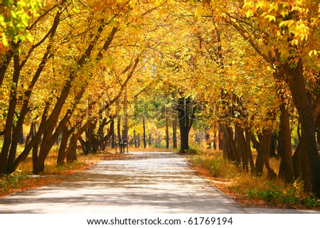 Yellow trees in park - stock photo