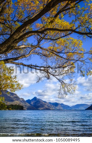 Yellow trees near Lake Wakatipu, Queenstown, New Zealand